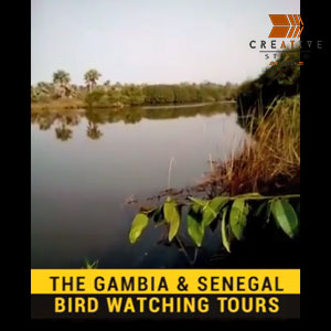 The Gambia Bird Watching Tour Promo